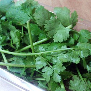 Coriander 'Slow Bolting'